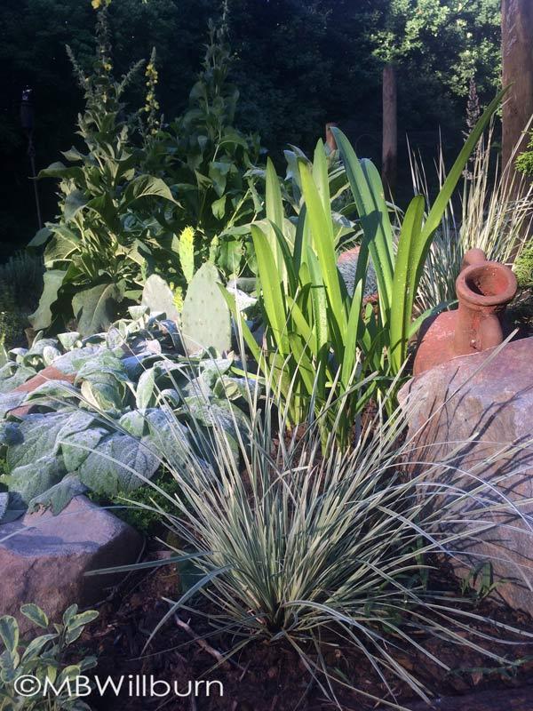californiagarden
