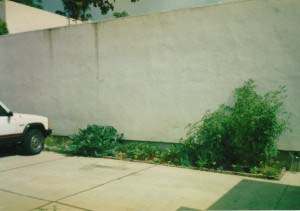 My first garden, against a wall, in a parking lot next to my tiny apartment. 34 square feet of garden that gave me 34,000 square feet of pleasure.