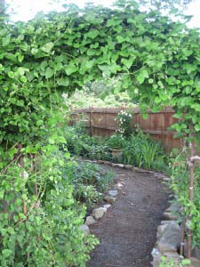 Gorgeous entrance to a restful shade garden bordered by a wooden fence; or ugly, root riddled shade under a maple tree and next door to an aggressive pitbull on a very long leash? Yep, it is - and was - both.