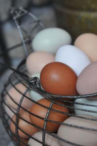 Recent egg shortages may have you thinking that hens might be a good idea for your garden - I completely agree!