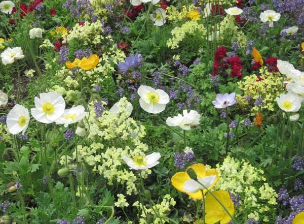 flower-mix