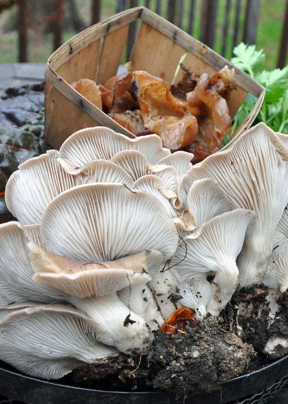 mushrooms gathered in september