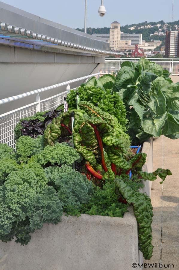 Pittsburgh-veggies