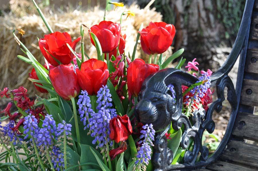 tulipbench