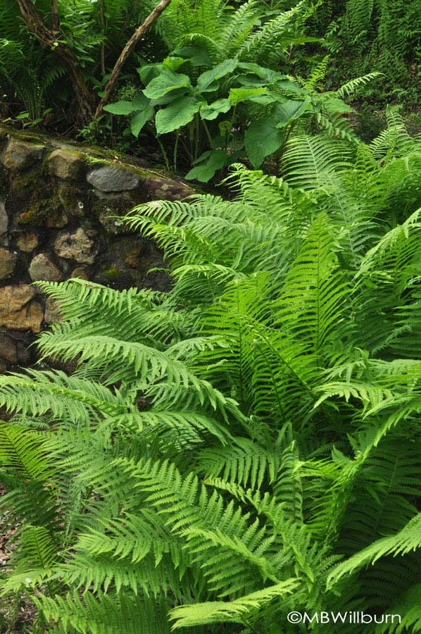 happy-ferns