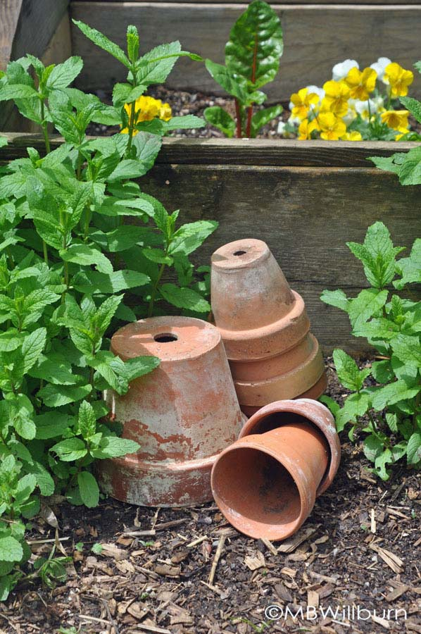 Every country gardener knows that one empty terracotta pot is lazinesss, three or more is art.