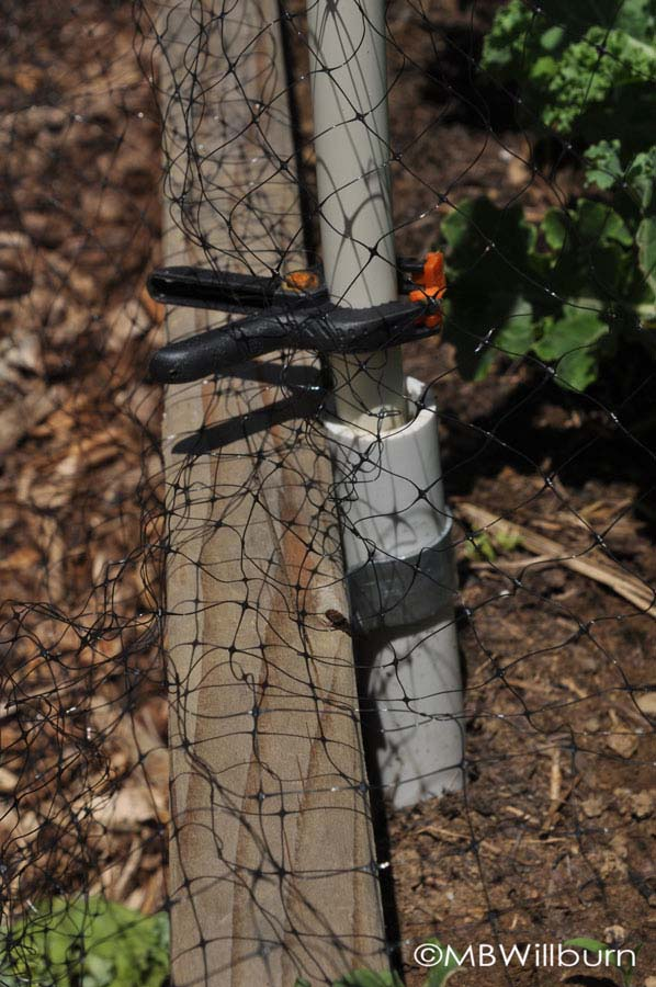 PVC footings can be used or left alone for the season, depending on need.  A bag of hardware store clamps ($8) are terrific clips to have on hand and can always be used elsewhere in the home or garden.