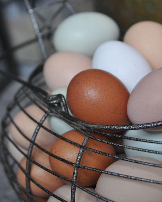 fresh-eggs2