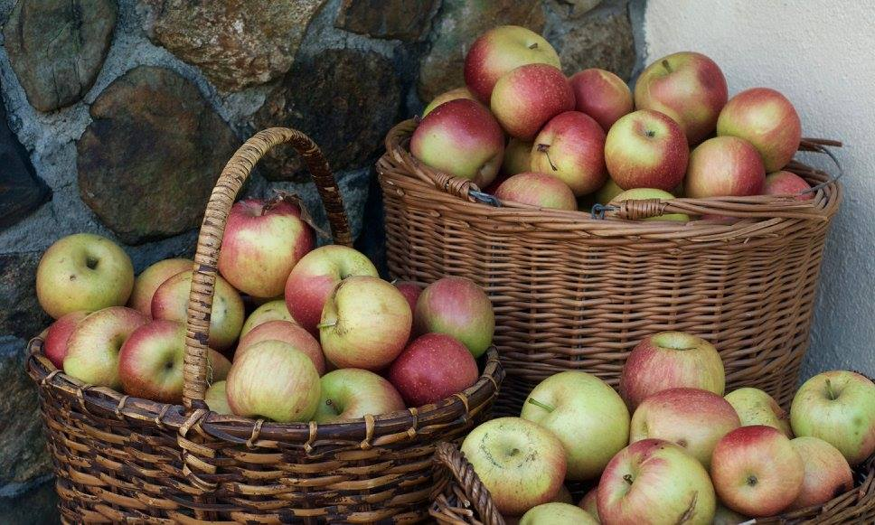 kf-basket-of-apples
