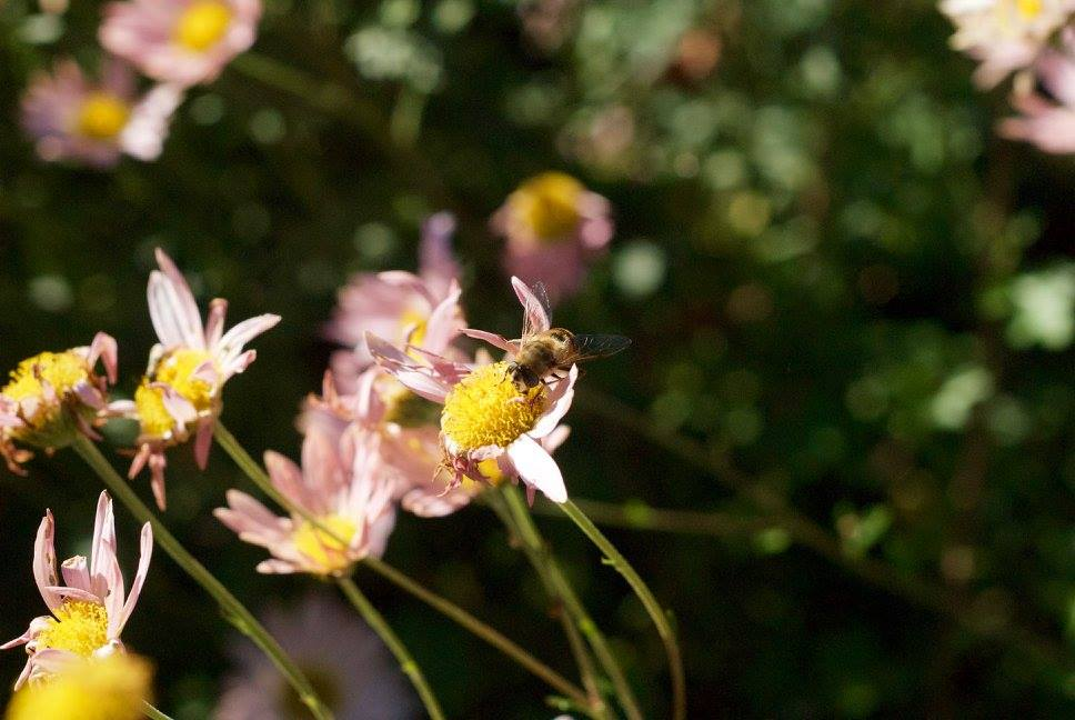kf-honeybee