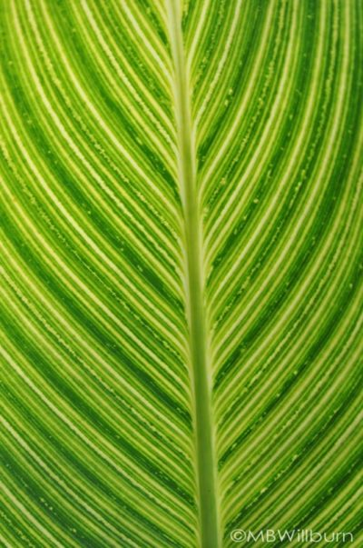 pretoria-foliage