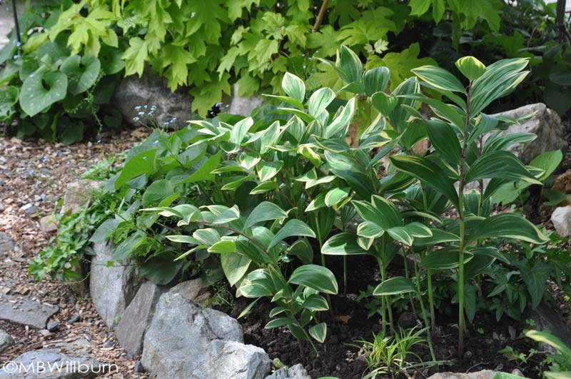 Small gardens allow the gardener to showcase healthy, beautiful specimens.
