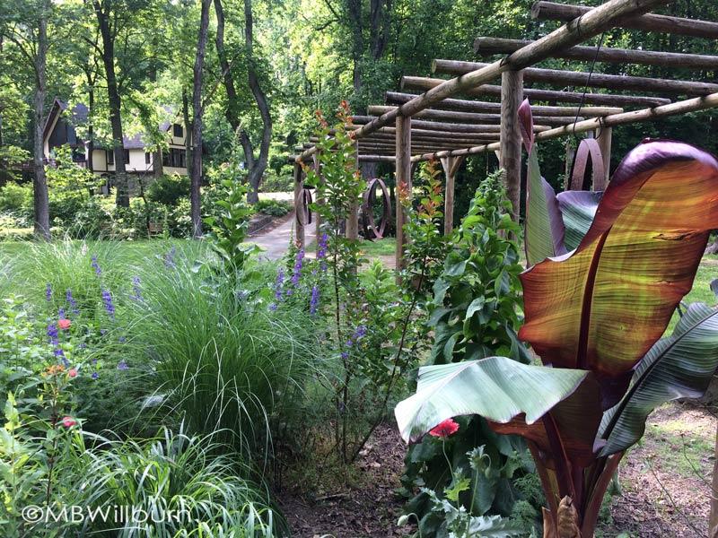 house-and-chicken-garden