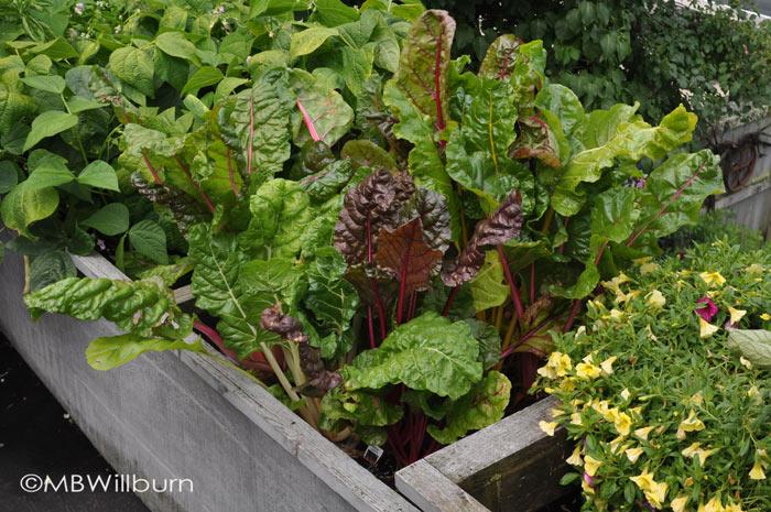 buffalo-rooftop-vegetables