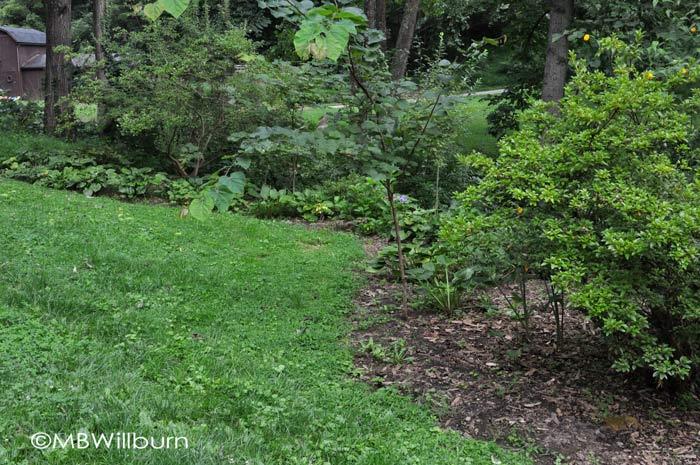 boring garden beds, azaleas