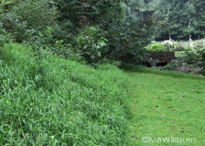 weeding, japanese stilt grass, new garden