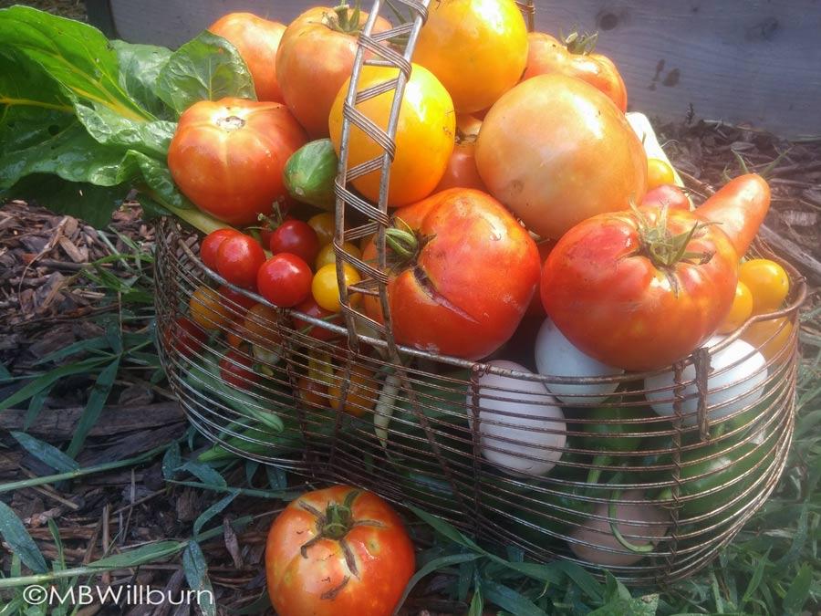 vegetables in basket waiting for preserving