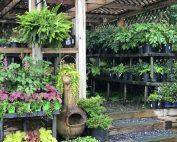 shade plants, nursery, mar-lu view, new garden