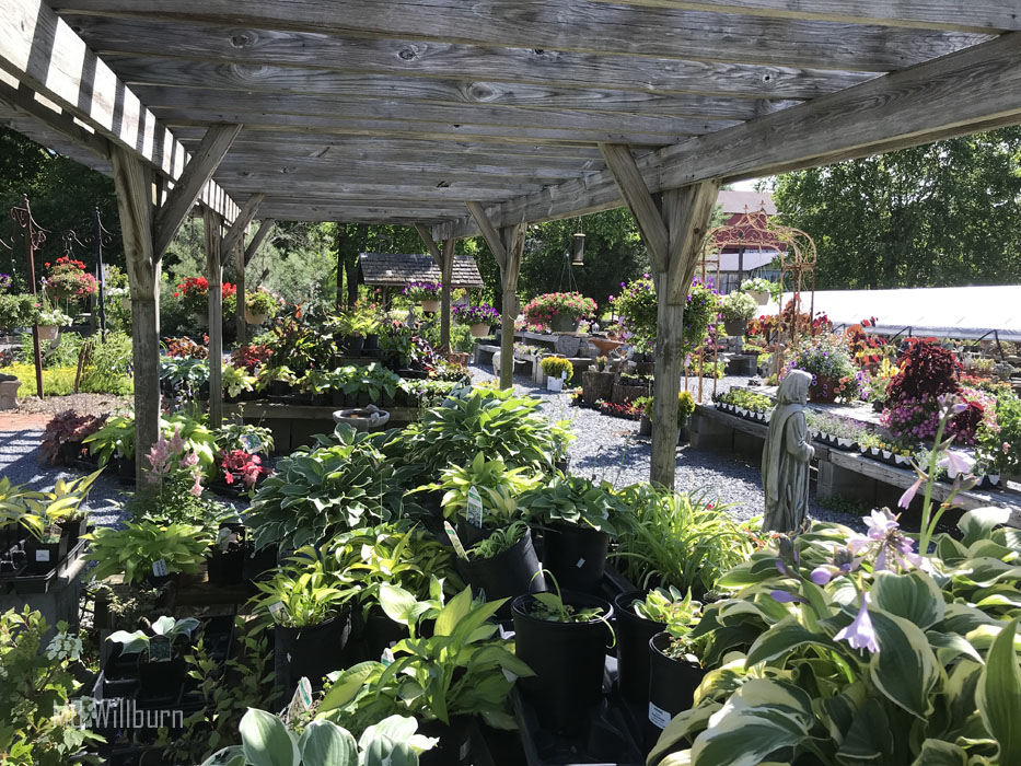 We All Struggle With Garden Design Woes But There S A Nursery In Frederick County That Specializes Helping You Solve Them And It Does So The Gift