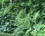erosion stoppers, ferns, hosta, ground cover