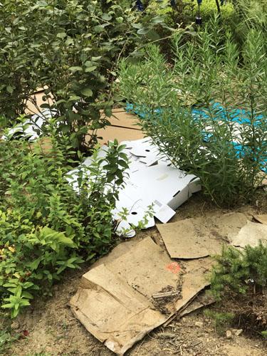 cardboard, garden, mulch