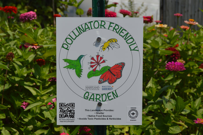 pollinator friendly garden, planting for pollinators, frederick county maryland