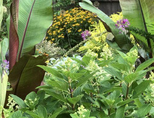The Garden in August