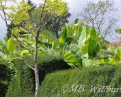 great dixter, exotic garden