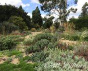 gravel garden, beth chatto gardens, essex, british gardens, british tours