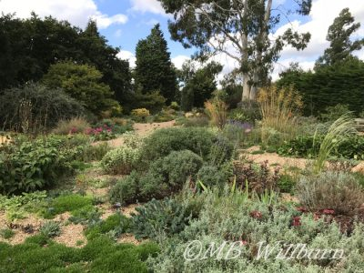 gravel garden, beth chatto gardens, essex, british gardens, british tours