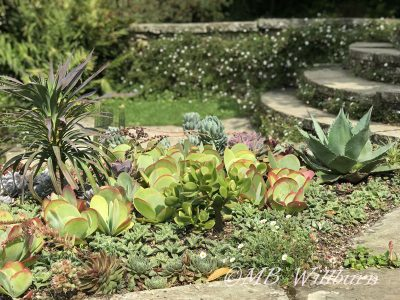 circular steps, luytens, succulents, great dixter