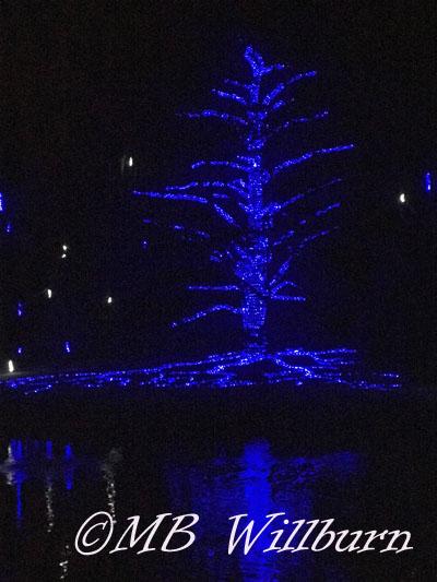 Longwood christmas, longwood gardens, longwood, atlas cedar