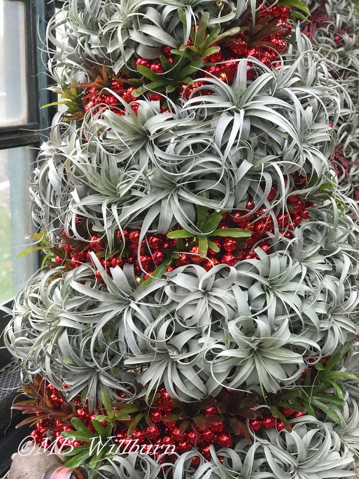 tillandsia, air plants, christmas tree, tillandsia tree