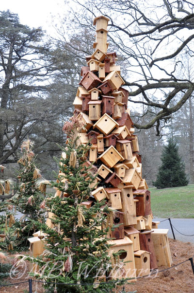 longwood, longwood christmas, longwood gardens