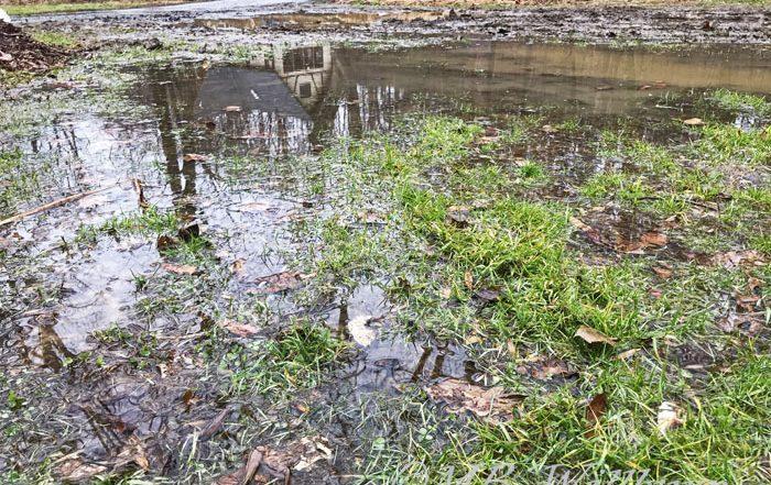 flooding, garden