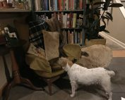 chair dog