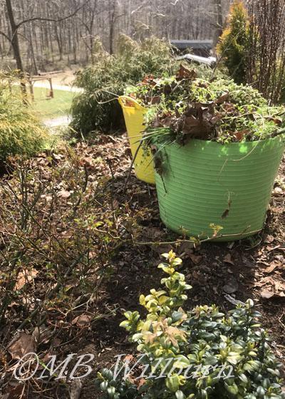 weeding bucket, trug, garden