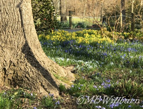 10 Tips and a GIVEAWAY to Make Bulb Planting Easier