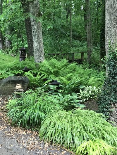 waterside planting