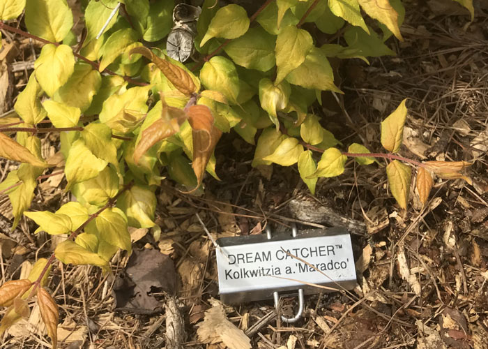 plant ID, plant labels,
