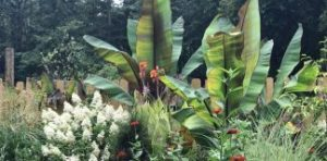 Images of rural life - tropical accents in the lower garden