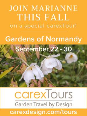 Carex Tours