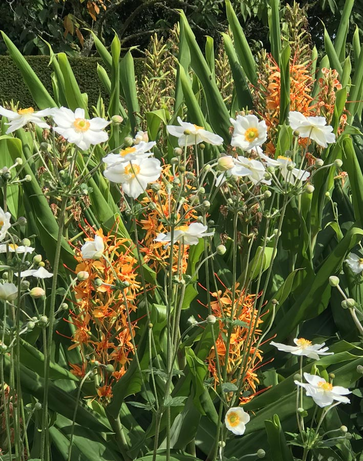 windflower and hedychium
