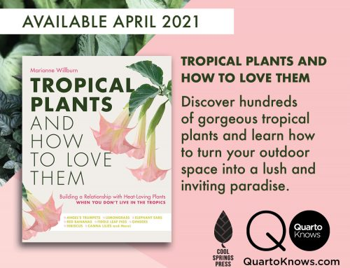 Top Ten Reasons to Pre-order Tropical Plants and How to Love Them!