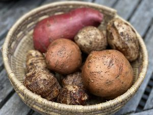 taro and sweet potato tubers