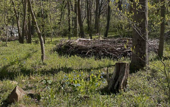 habitat nest